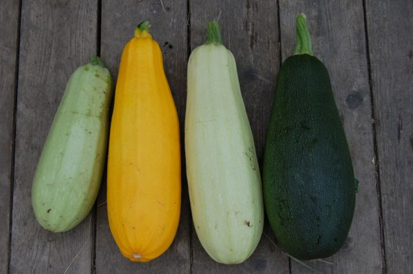 Patti's Healthy Eating Tip: Zucchini