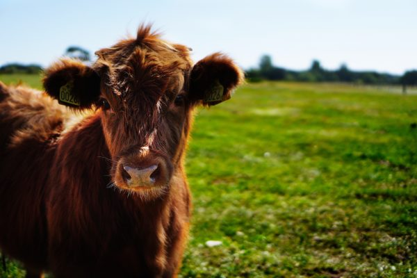 Why Wild, Grass-Finished, and Pasture-Raised Matters